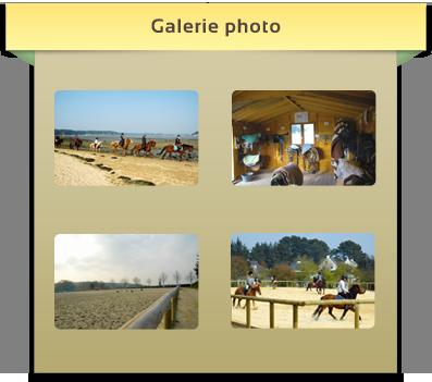 Gallerie photos du centre équestre de Baden en Bretagne, Morbihan