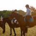 Cours d'équitation en Morbihan