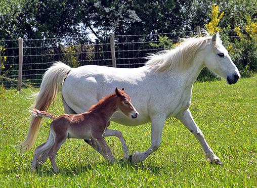 Nouveau-né à la Ferme Equestre voir les photos