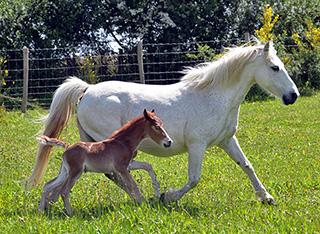Nouveau-né et sa maman à la Ferme Equestre de Baden