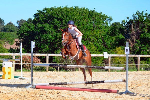 Saut d'obstacle stage d'équitation