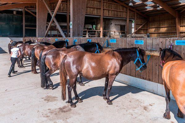 Les chevaux et poneys au centre équestre