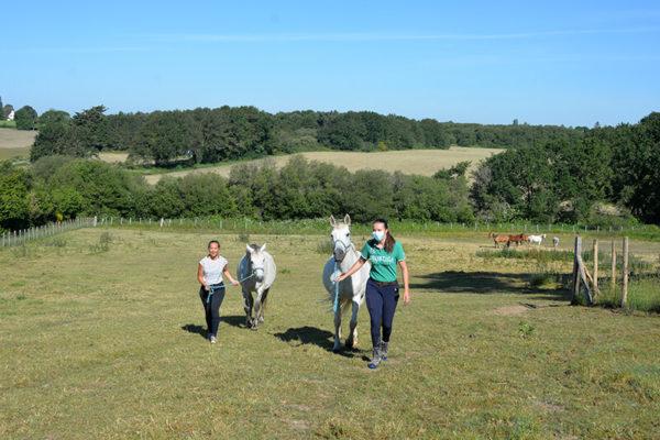 Aller chercher les chevaux au pré