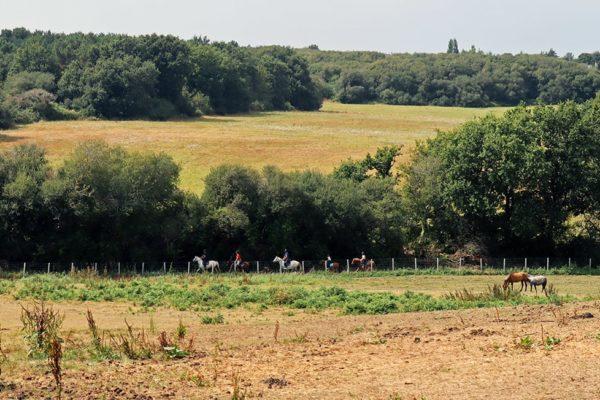 Balade à poney au bord de l'étang